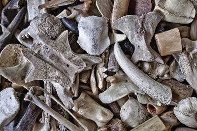 co jsou to kosti