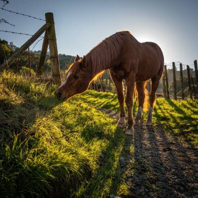 kloubní výživa pro koně