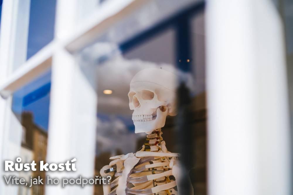 růst kostí
